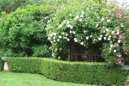 Galerie: Garten